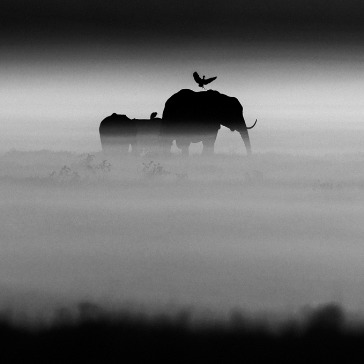 © The Family Album of Wild Africa by Laurent Baheux, published by teNeues and YellowKorner, www.teneues.com, www.yellowkorner.com. Elephants and bird, Kenya 2015, Photo © Laurent Baheux, www.laurentbaheux.com