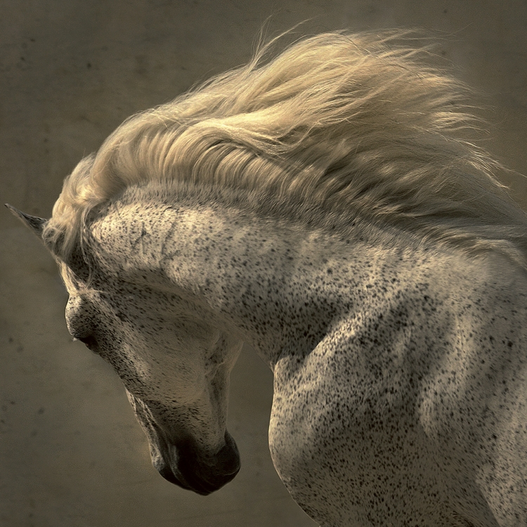 © Horses by Tony Stromberg, to be published by teNeues in August 2016, € 49,90, www.teneues.com, Photo © 2016 Tony Stromberg. All rights reserved. www.tonystromberg.com