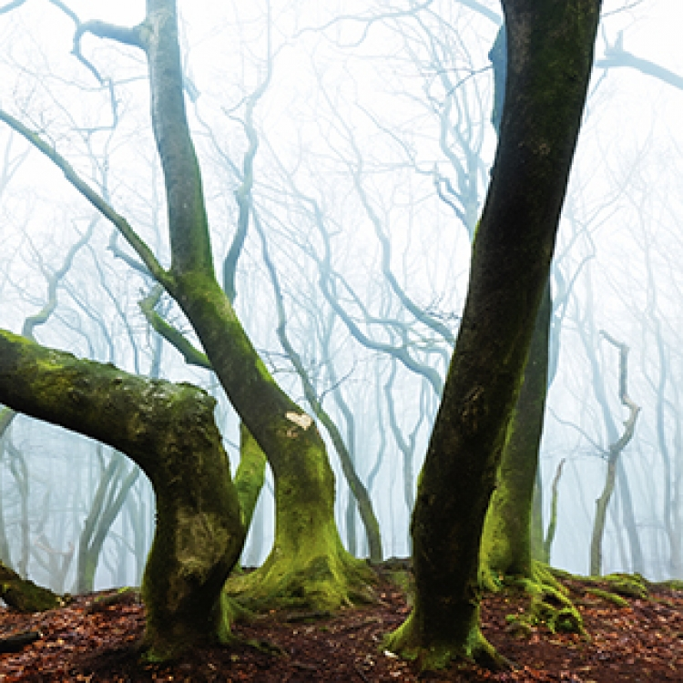 © Hasselblad Masters Volume 5 - Inspire, published by teNeues, www.teneues.com. Photo © Image by Lars van de Goor, Hasselblad Master 2016: Landscape, www.hasselblad.com/inspiration/masters/masters-2016