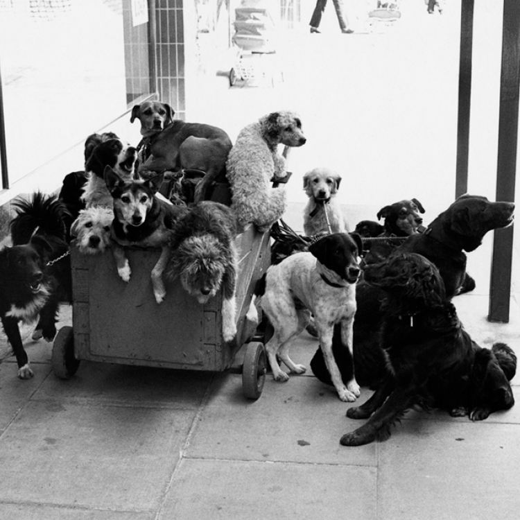 © Elliott Erwitt's Dogs SMALL FORMAT EDITION, to be published by teNeues in March 2017, € 9,99, www.teneues.com, England, 1974, Photo © Elliott Erwitt/Magnum.