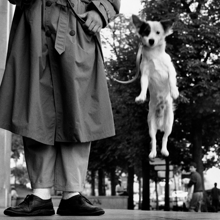 © Elliott Erwitt's Dogs SMALL FORMAT EDITION, to be published by teNeues in March 2017, € 9,99, www.teneues.com, Paris, France, 1989, Photo © Elliott Erwitt/Magnum.