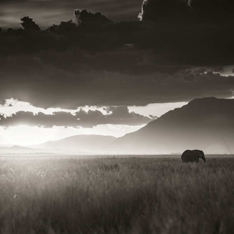 Elephant walking through tall grass in sunset, Amboseli National Park, Kenya 2017, Photo © 2017 Joachim Schmeisser. All rights reserved. www.joachimschmeisser.com