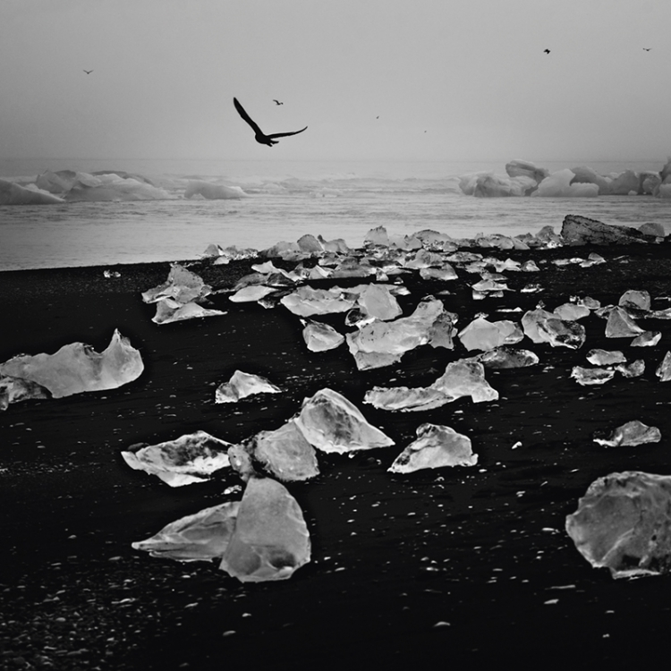 Ice, black sand and birds, Iceland, 2015 Photo © Laurent Baheux