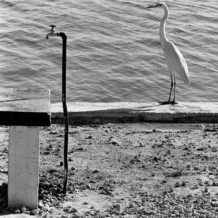 © Elliott Erwitt Personal Best, published by teNeues, www.teneues.com. Florida Keys, USA, 1968, Photo © 2018 Elliott Erwitt/Magnum Photos. All rights reserved.